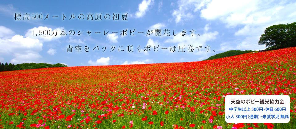 天空を彩るポピーまつり公式サイト
